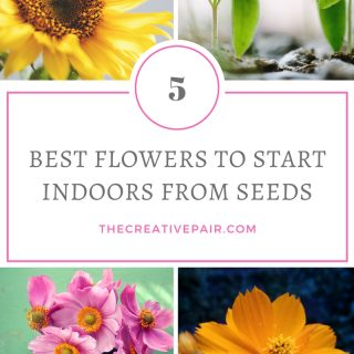 5 best flowers to start indoors from seeds