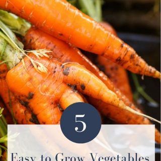 5 Easy to Grow Vegetables for Beginner Gardeners